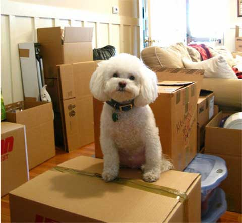 Find a pet sitter while you move